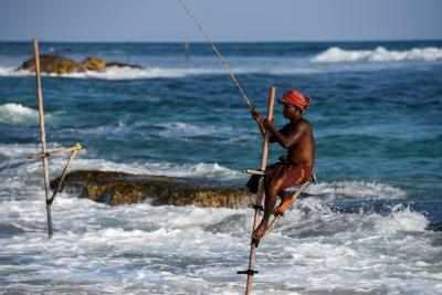 अवैध रूप से शार्क पकड़े जाने की जांच करेगी श्रीलंका सरकार