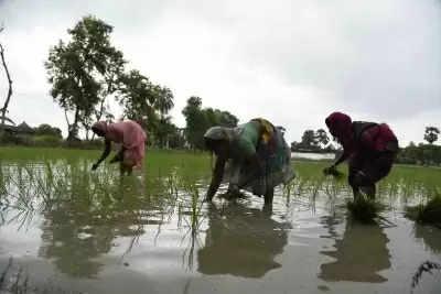 यूपी में चावल उत्पादन को बढ़ावा देने के लिए परियोजना पर हस्ताक्षर