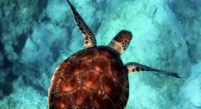 कोविड -19 लॉकडाउन ने समुद्र के शोर को कम किया : अध्ययन