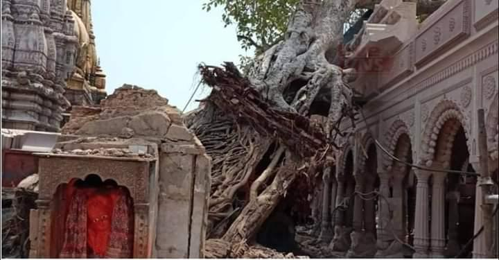 काशी विकास समिति ने की पौराणिक अक्षय वट को पुन: प्रत्यारोपित करने की मांग